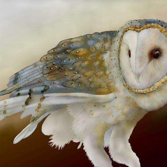 Card Set (Boxed): Barn Owls
