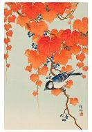 Card Set (Boxed): Ohara Shoson