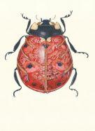 Card (DM Collection):  Ladybird