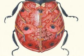 Card (DM Collection):  Ladybird