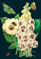 Card (Madame Treacle): Foxglove And Peony