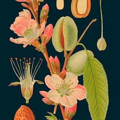Card (Madame Treacle): Almond