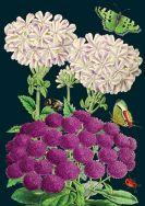 Card (Madame Treacle): Floral Purple