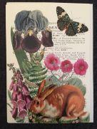 Card (Madame Treacle): Rabbit in the Garden