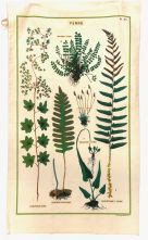 Tea Towel (Cavallini & Co): Vintage - Ferns