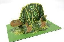 Cards (Alice Melvin):  Tortoise