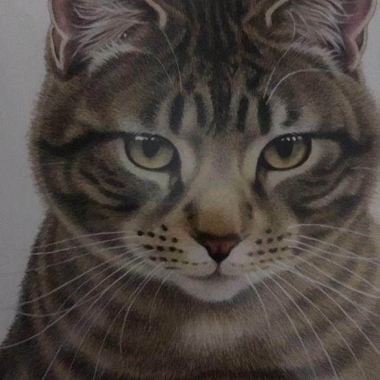 Card Set (Wallet): Single Cats by Francien
