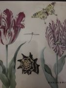 Card Set (Wallet): Tulips Butterfly Shell Dragonfly