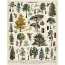 Jigsaw (1000 piece puzzle): Arboretum