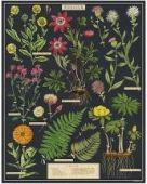 Jigsaw (1000 piece puzzle): Herbarium