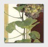 Card Set (Wallet): Cressida Campbell -  Petal and Leaves