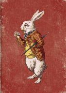 Card: White Rabbit