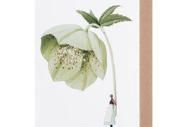Card (Laura Stoddart): Hellebore