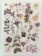 Card (Fireweed): Love Garden