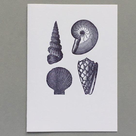 Card (Keyhole Collection): Shells