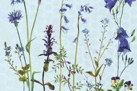 Card (Annabel Langrish): Cornflowers and Bluebells