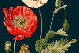 Card (Madame Treacle): Poppy