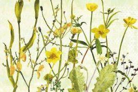 Card (Annabel Langrish): Marigolds and Irises