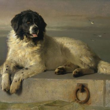A_Distinguished_Member_of_the_Humane_Society_by_Sir_Edwin_Landseer