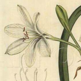Discovering-Aust.-flora-2
