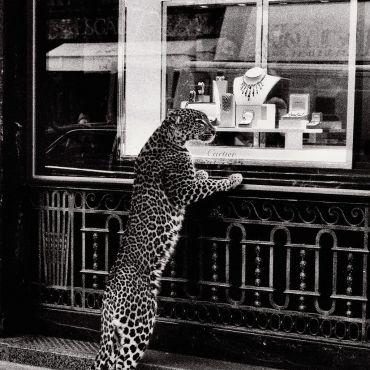Cartier advertisement, circa 1950 Jean Larivière